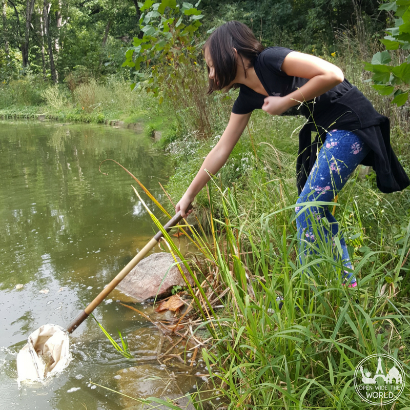 Allerton Park Family Campout wildlife survey at Mansion Pond