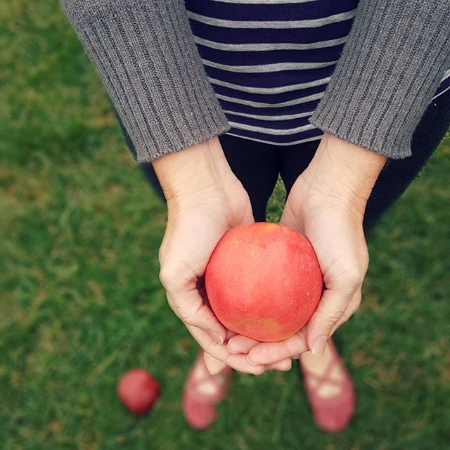 "I've been going to orchards since the days when we used to put on our ""grubbies"" to participate in the simple act of picking apples. . So it can feel a bit like my beloved tradition is changing too much when I see orchards now full of trinkets and gift shops, Instagrammers and selfie sticks, an endless prefabricated entertainment options. . But then I remember that the tradition wasn't just mine to begin with. . When the Industrial Revolution began moving people into stifling cities in claustrophobic numbers, weekday workers began seeking weekend connection to their former rural roots, and agritourism took hold. . Today, the U.S. has an estimated 25,000 agritourism sites, with products and services valued at over $1 billion. . We contributed our share of that money during our biweekly visit to a local orchard, because we just can't bring ourselves to buy grocery store apples when we can connect with our ""grubby"" roots instead. . How about you? Is a visit to an apple orchard part of your fall tradition? . . . #openwidetheworld #localfarm #orchard #applepicking #agritourism . #fallfun #fallactivities #fallfestivities . #MWTravel #midwestmoment #enjoyillinois"