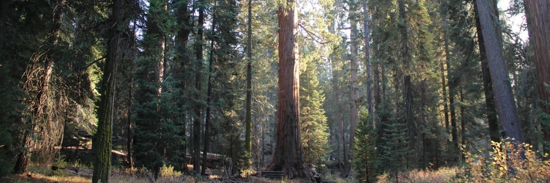 sequoia-national-forest-page-banner-desktop.jpg