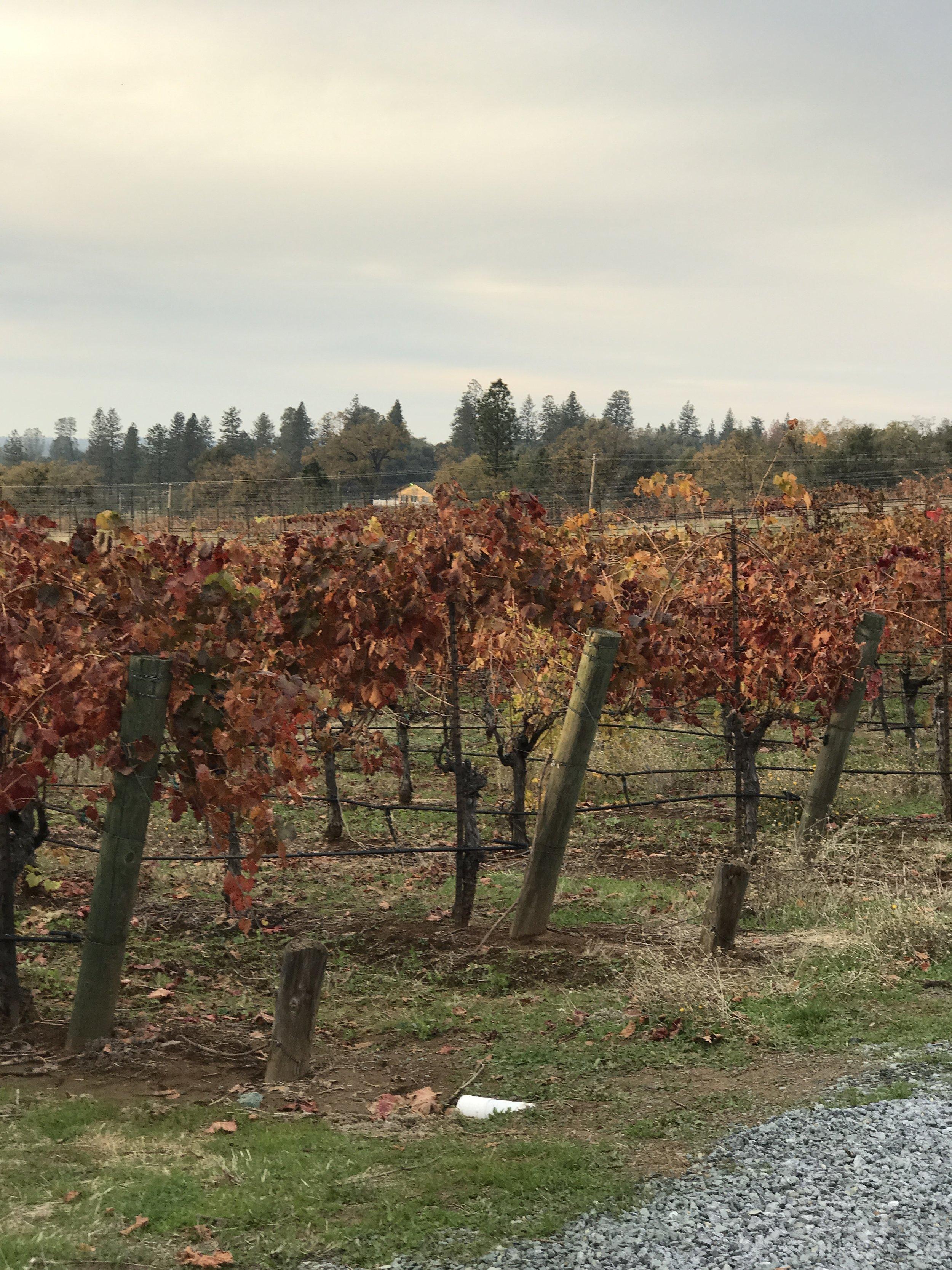 sacramento, nor cal, wine country, port, california, thanksgiving, family sale round up