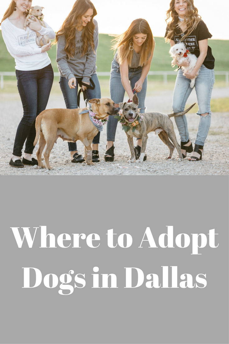 adopt don't shop, beckley & co, tree kisser tee, venus flower co, epic animal rescue, where to adopt dogs in dallas, dfw, dogs available for adoption in dallas, adopt don't shop