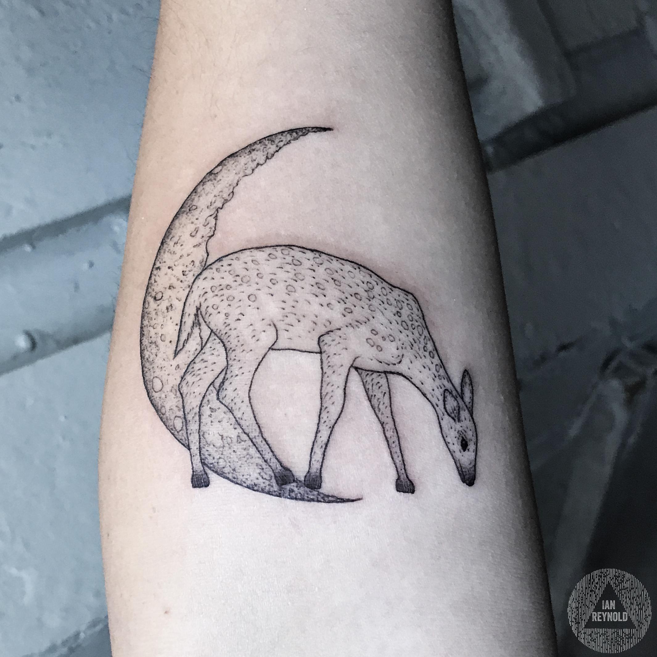 crescent moon deer