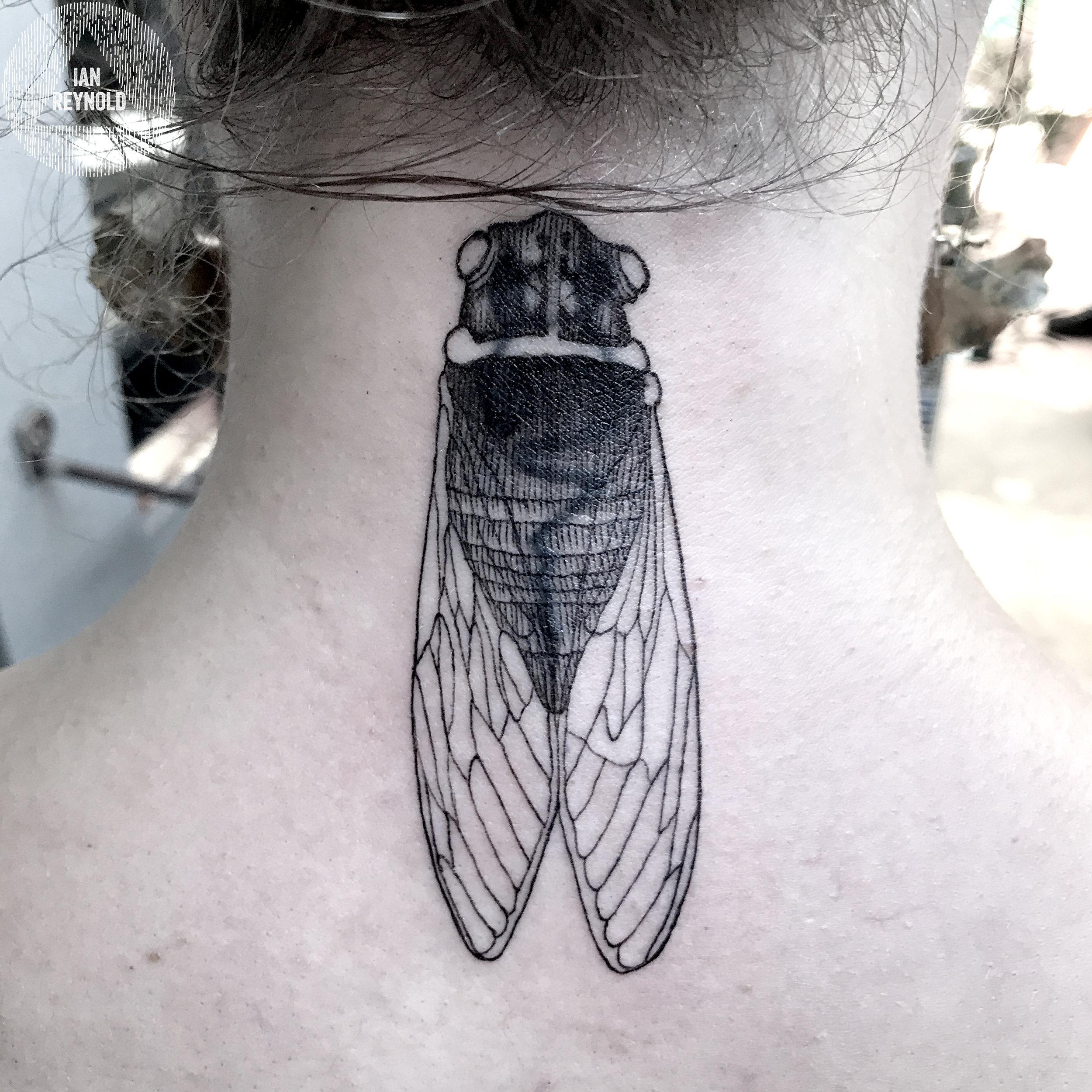 Blackened Cicada