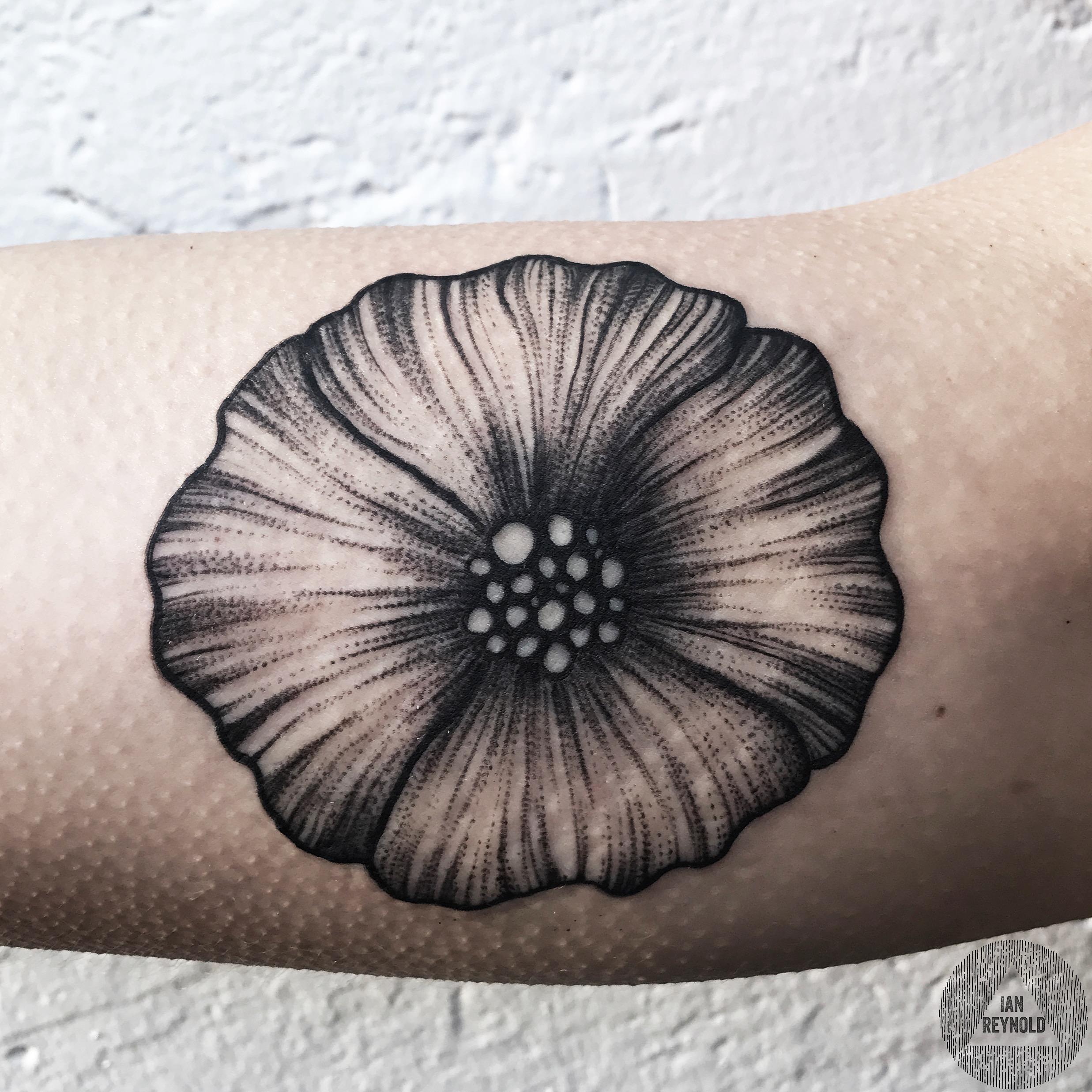 Blackened Poppy