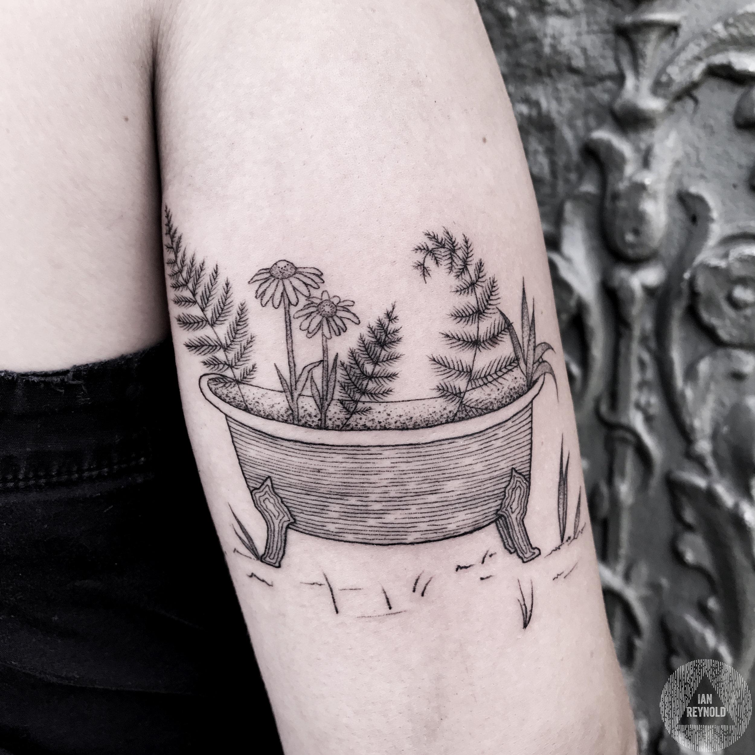 Bathtub Ferns