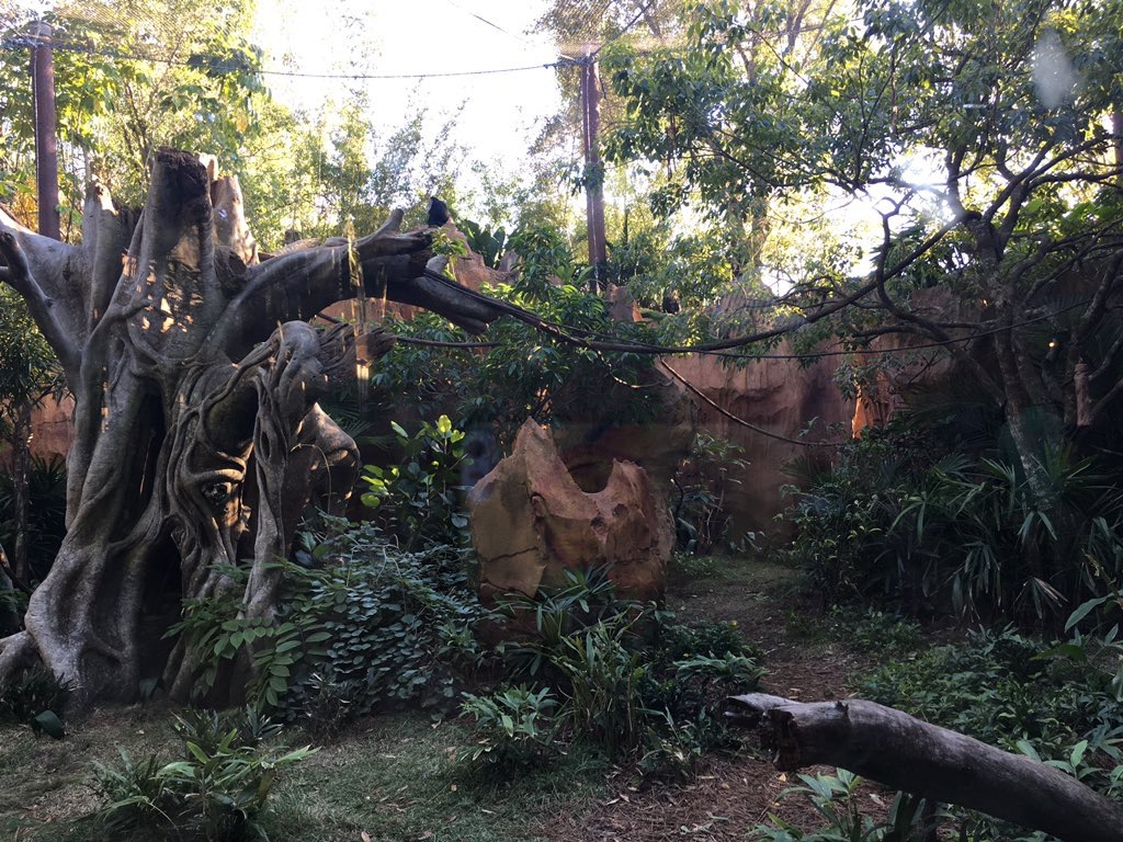 WDW's monkey exhibit. Photo from WDW News Today: http://wdwnt.com/blog/2016/12/photos-new-monkey-exhibit-opens-animal-kingdom/.