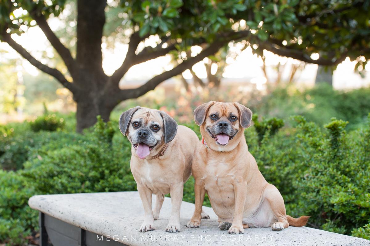 Cooper & Shay