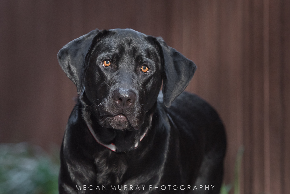 photographing black dogs