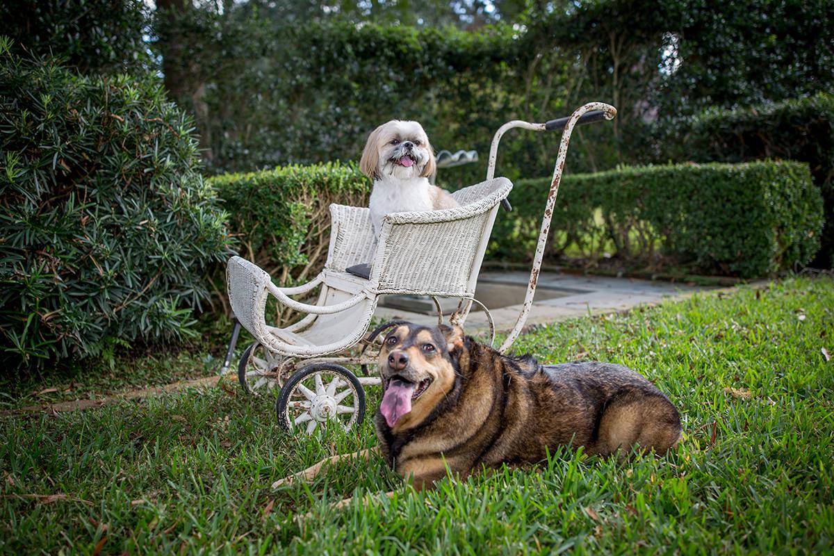 Lola & Baxter (photo credit: John Tran)