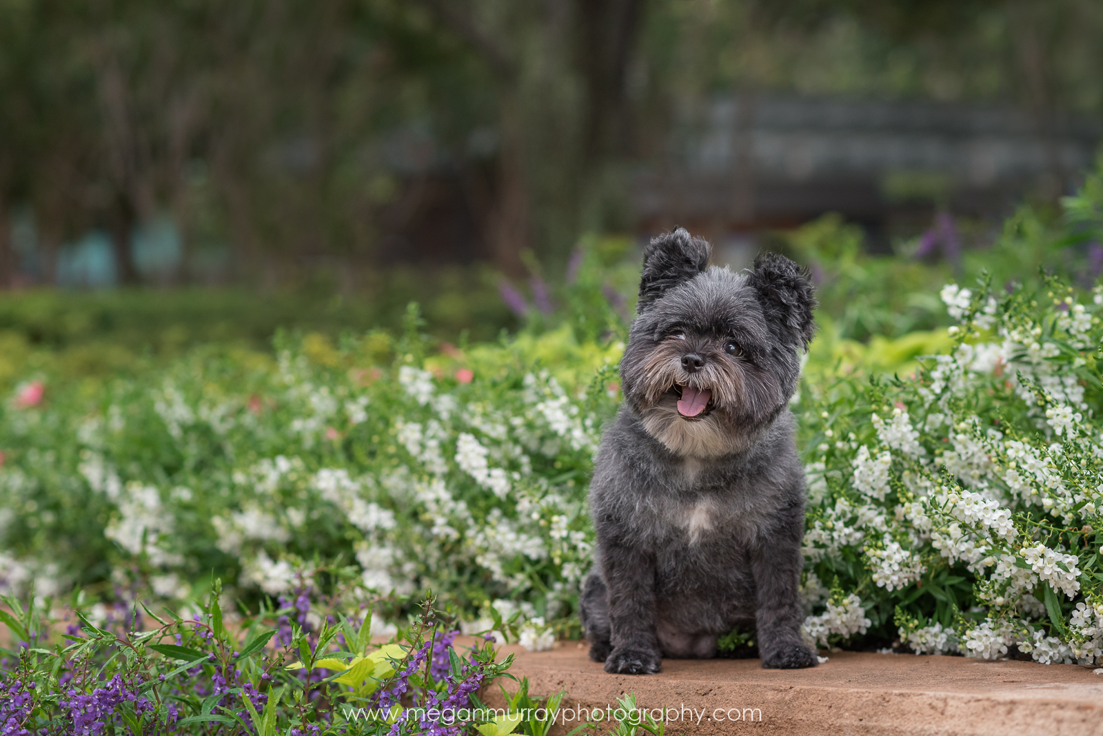 black fluffy happy dog in spring flowers in houston park