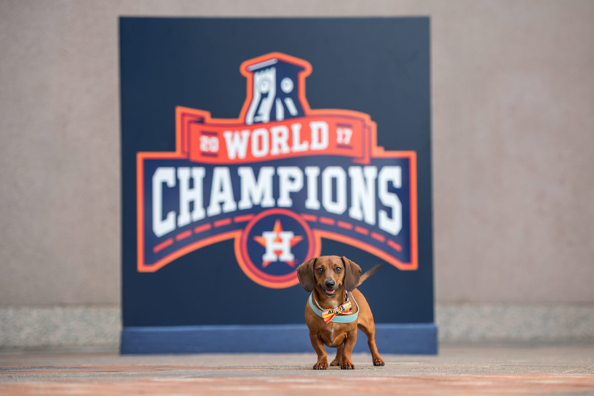 dachshund at houston astros minute maid park baseball fan dog