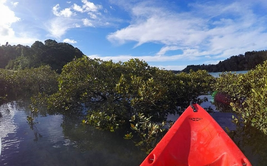 Ronna the Explorer in the mangroves, not the best idea when you're on a double kayak.