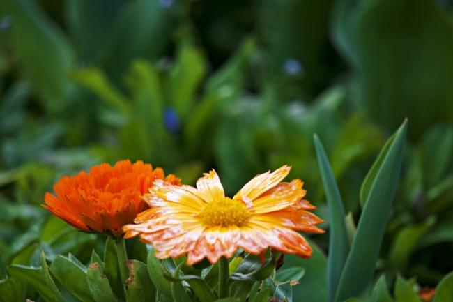 FlowersInMacro.jpg