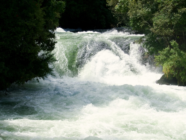 Kaituna Falls is just upstream from the Trout Pool.