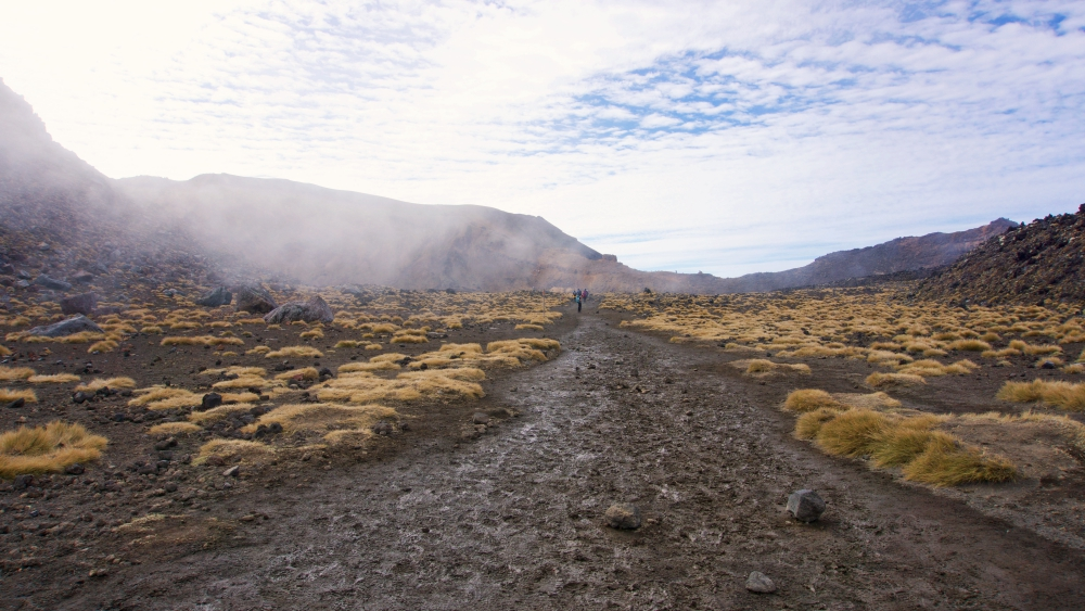 The tussock flats of the South Crater - enjoy the rest, there's a short but steep climb to get to the Red Crater.