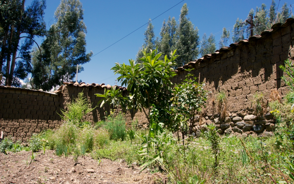 The family garden where they grow corn, herbs and some fruit trees.