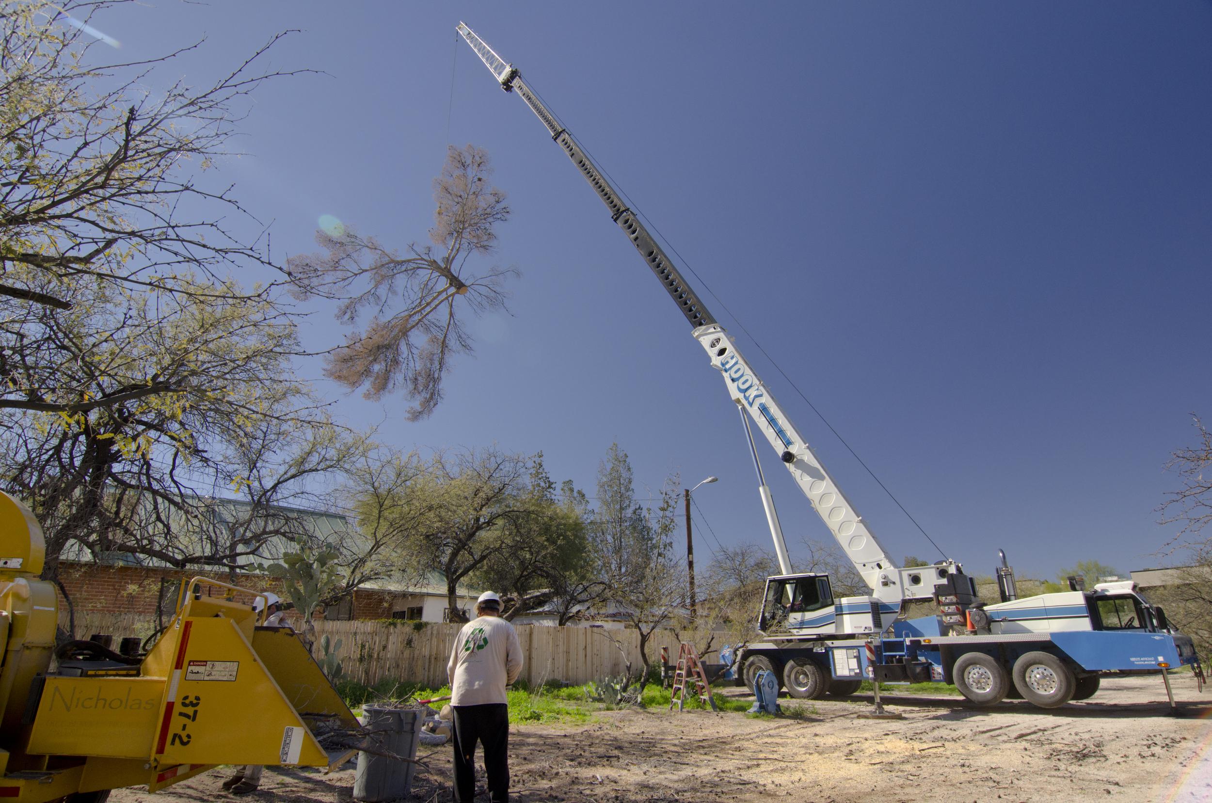 tree_removal_crane.jpg