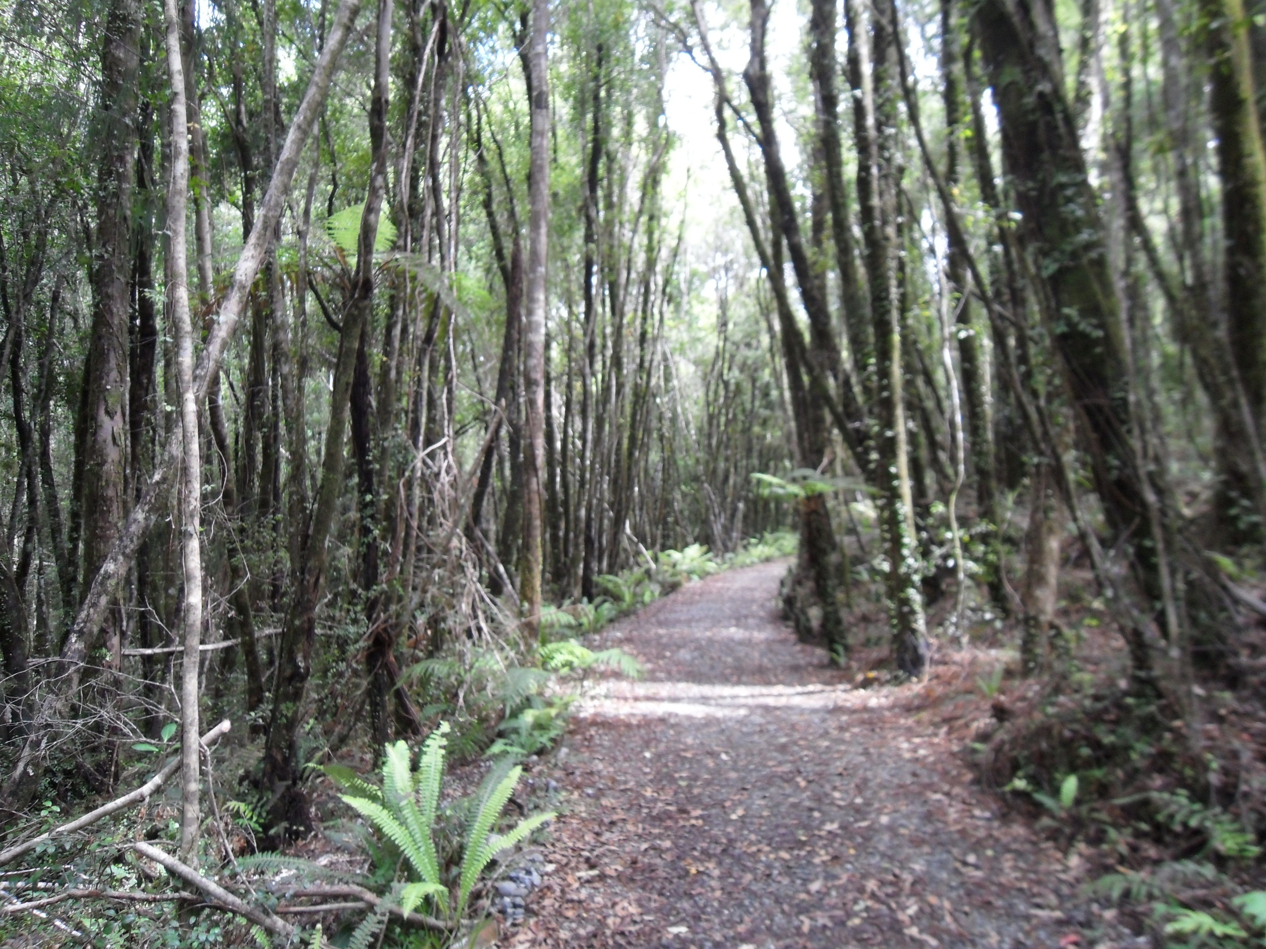 West Coast Wilderness Trail (taken near Kumara)