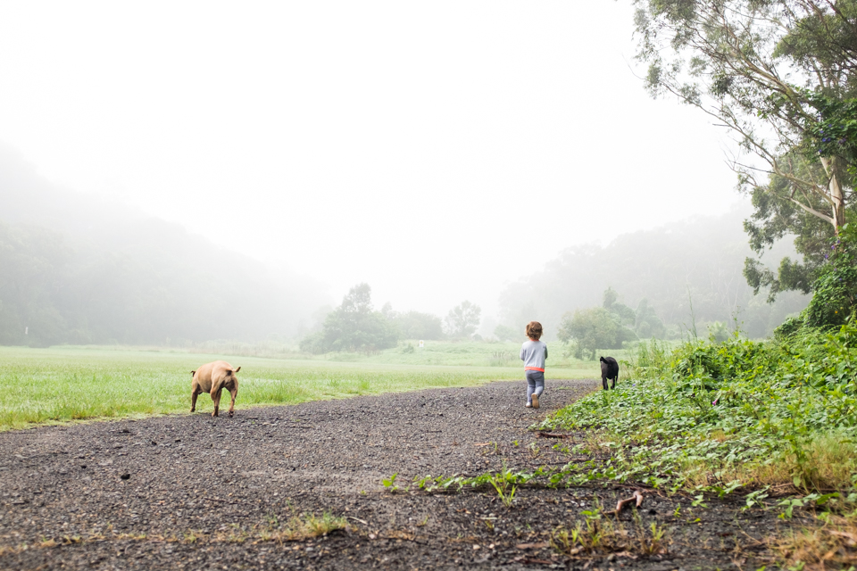 Walking the dogs in the fog