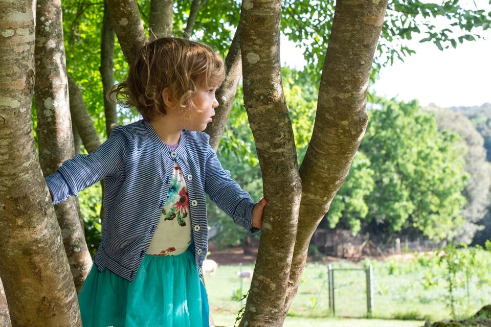Tree climbing, Tuscany | Simignano