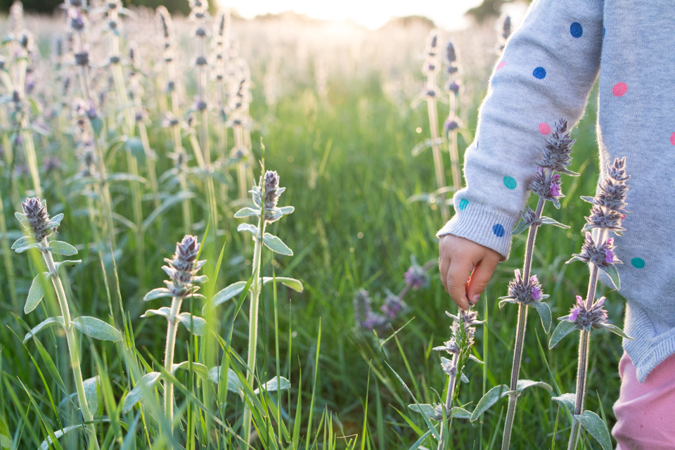 Searching for purple flowers | Simignano