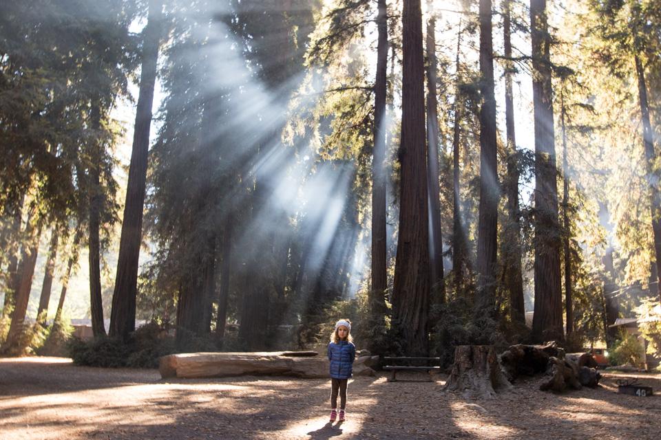 Camping under redwoods