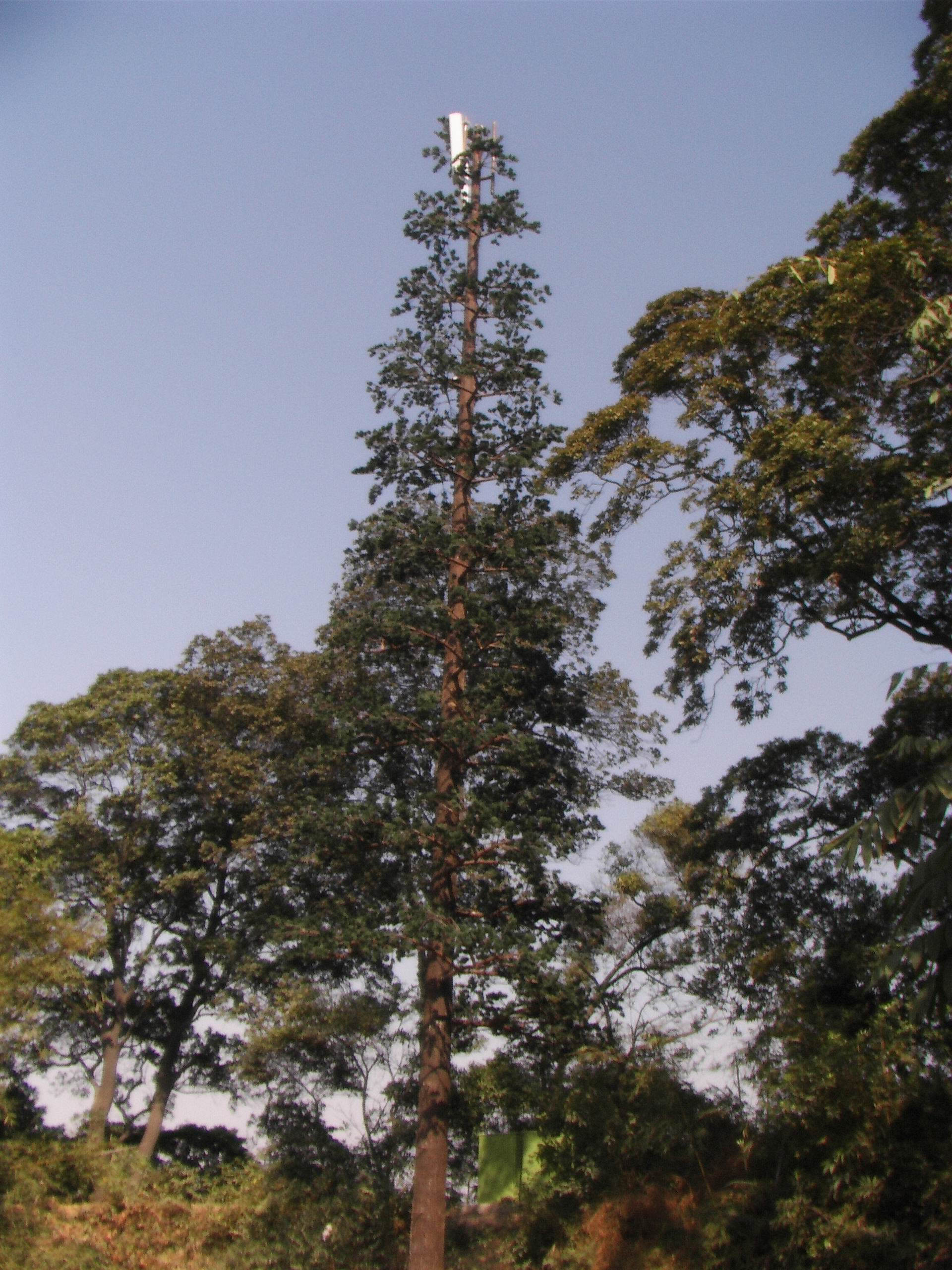 PINE TREE TOWER 01.jpg