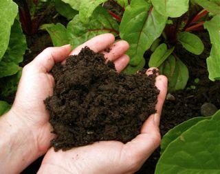 compost-hands