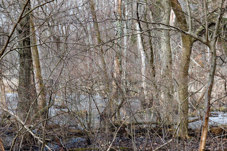 Hammond Pond Parkway #1, 2018