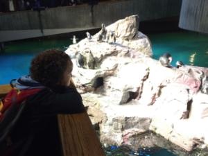 Hunter loves penguins