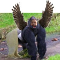 A gor-iger-polalcon