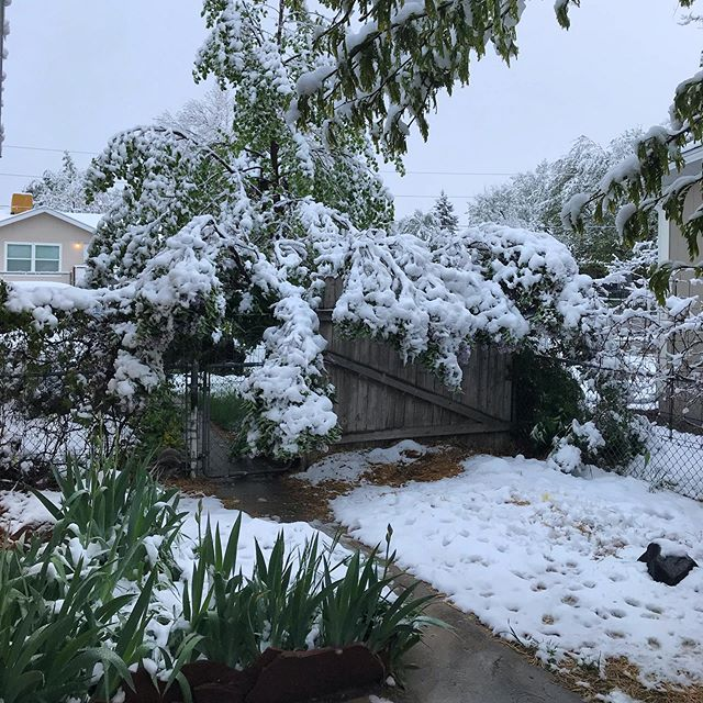 Crazy Colorado Spring! Almost the end of the school year, summer break is around the corner! #coloradospring #snowinmay