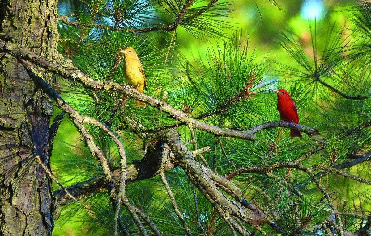 Birds.cmyk.jpg