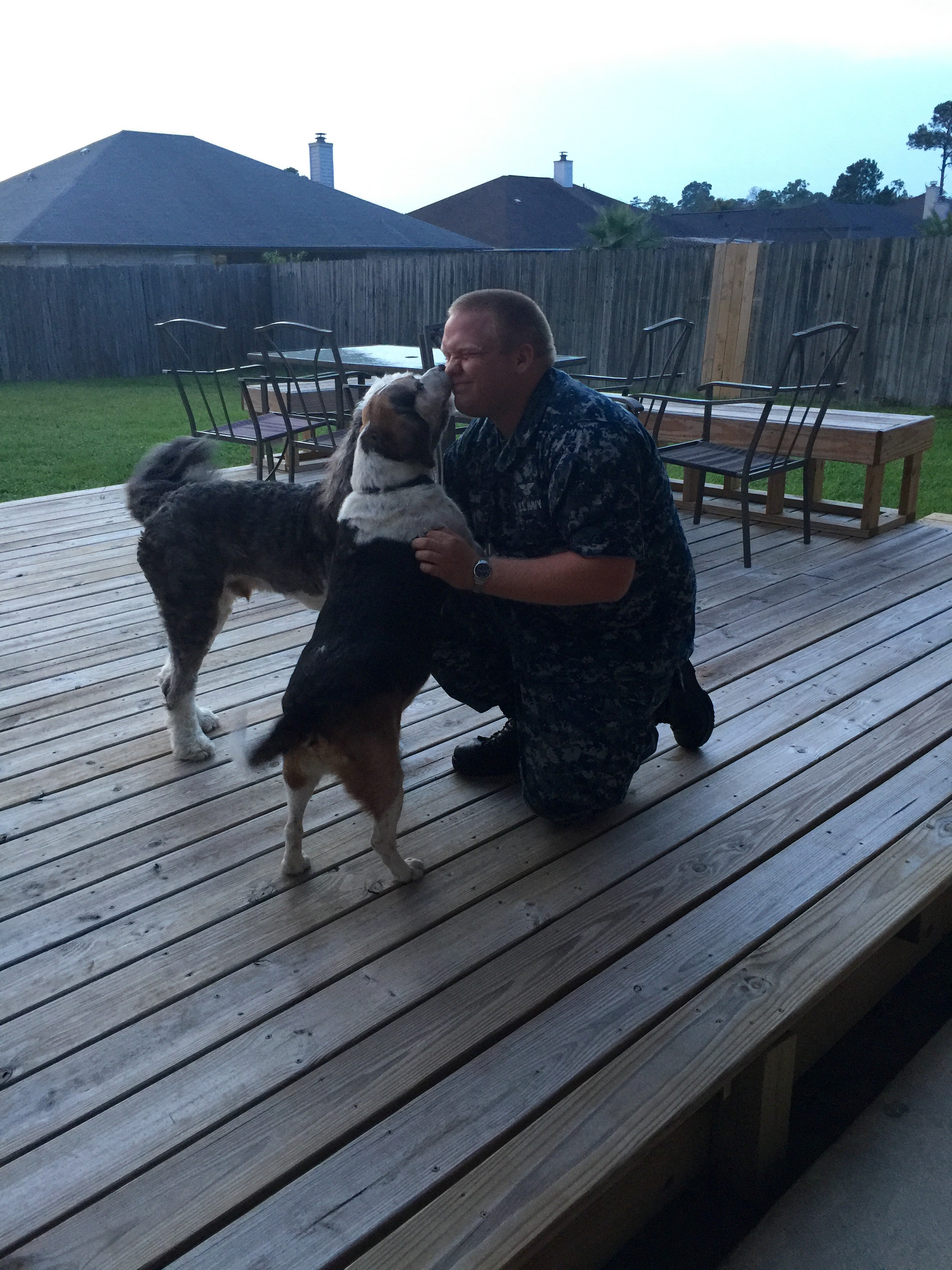 Buddy comes home to his owner.