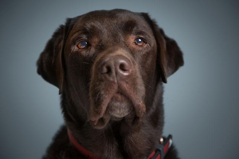 Magnus #Senior Canine