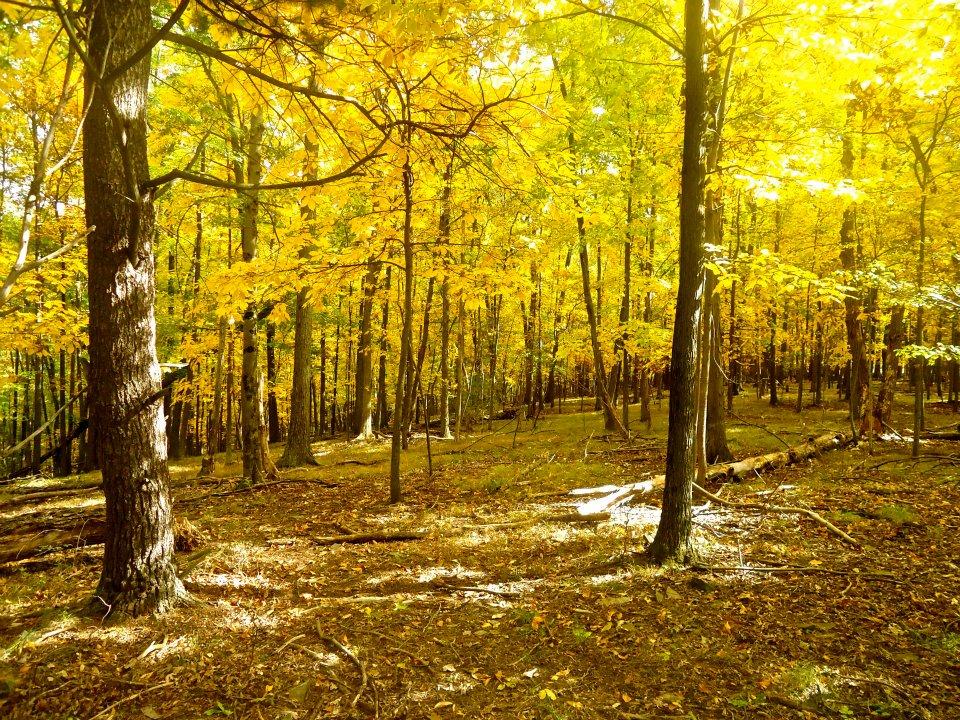 Fall_Yellow_2.jpg