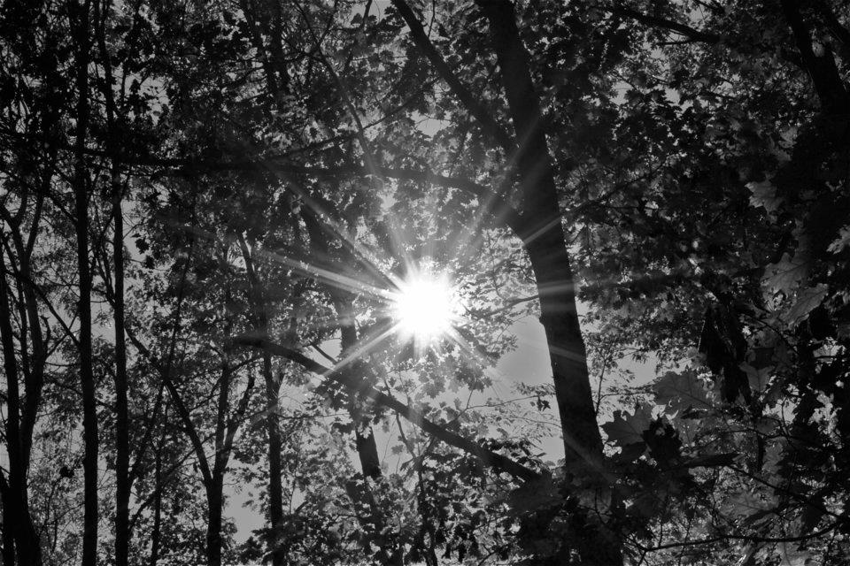 Sunburst_2.jpg
