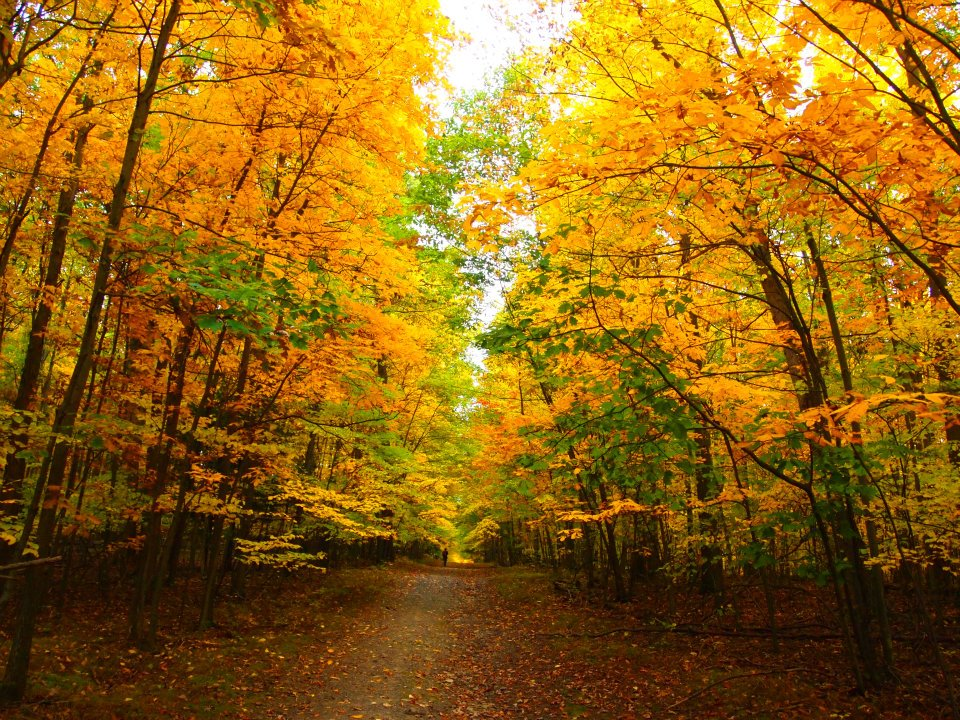 BlueGold_Trail_Hiker.jpg