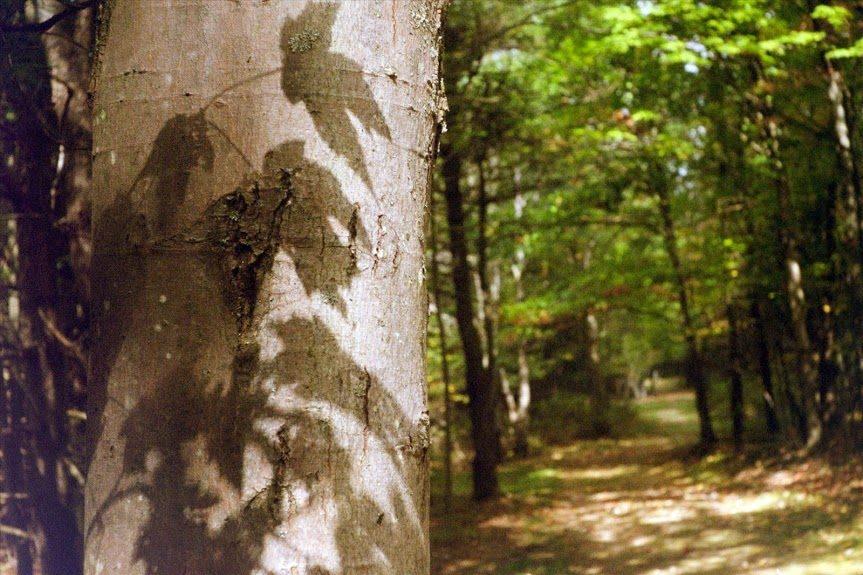 Nature_Trail_Shadows.jpg