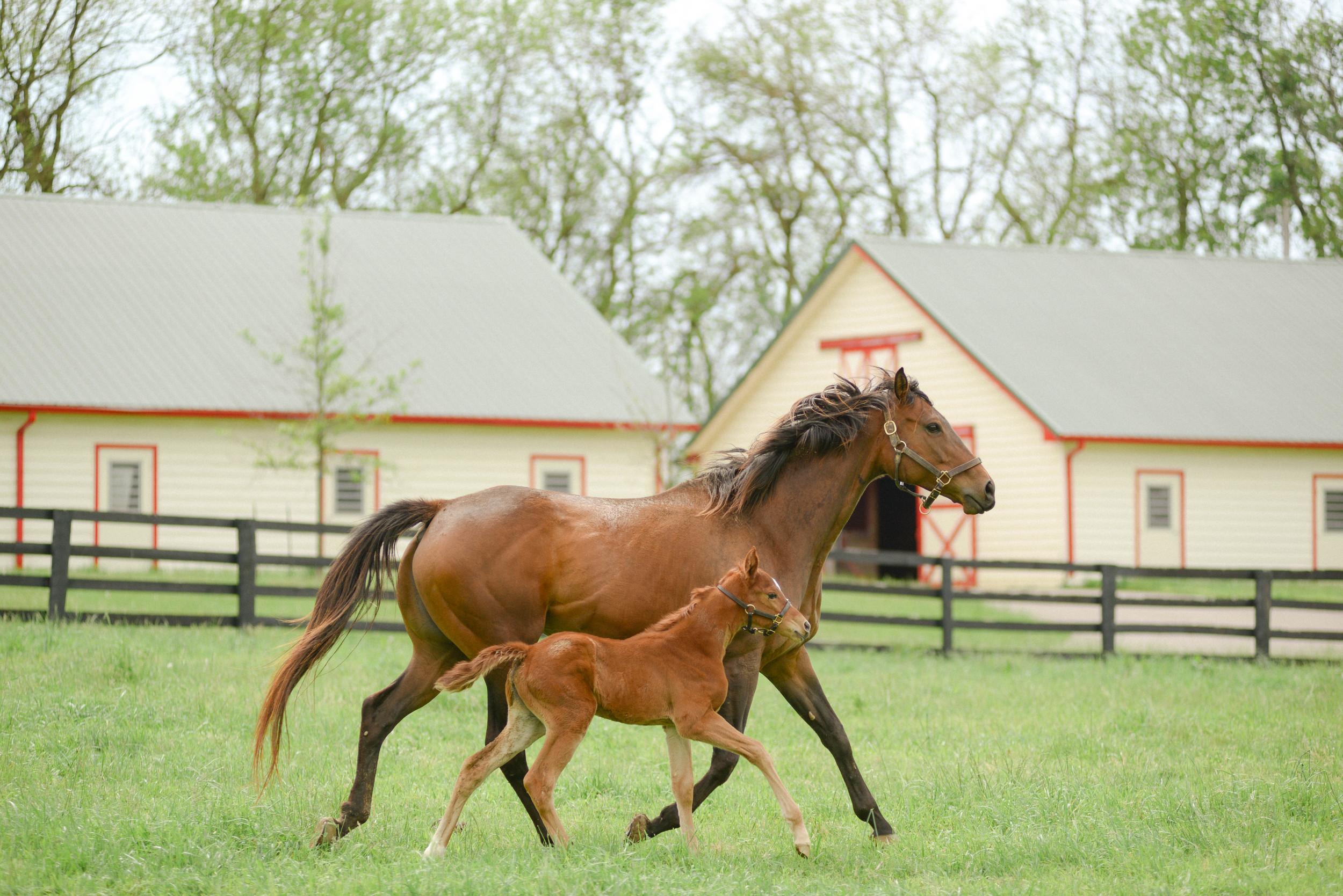 Lexington, KY horse farms