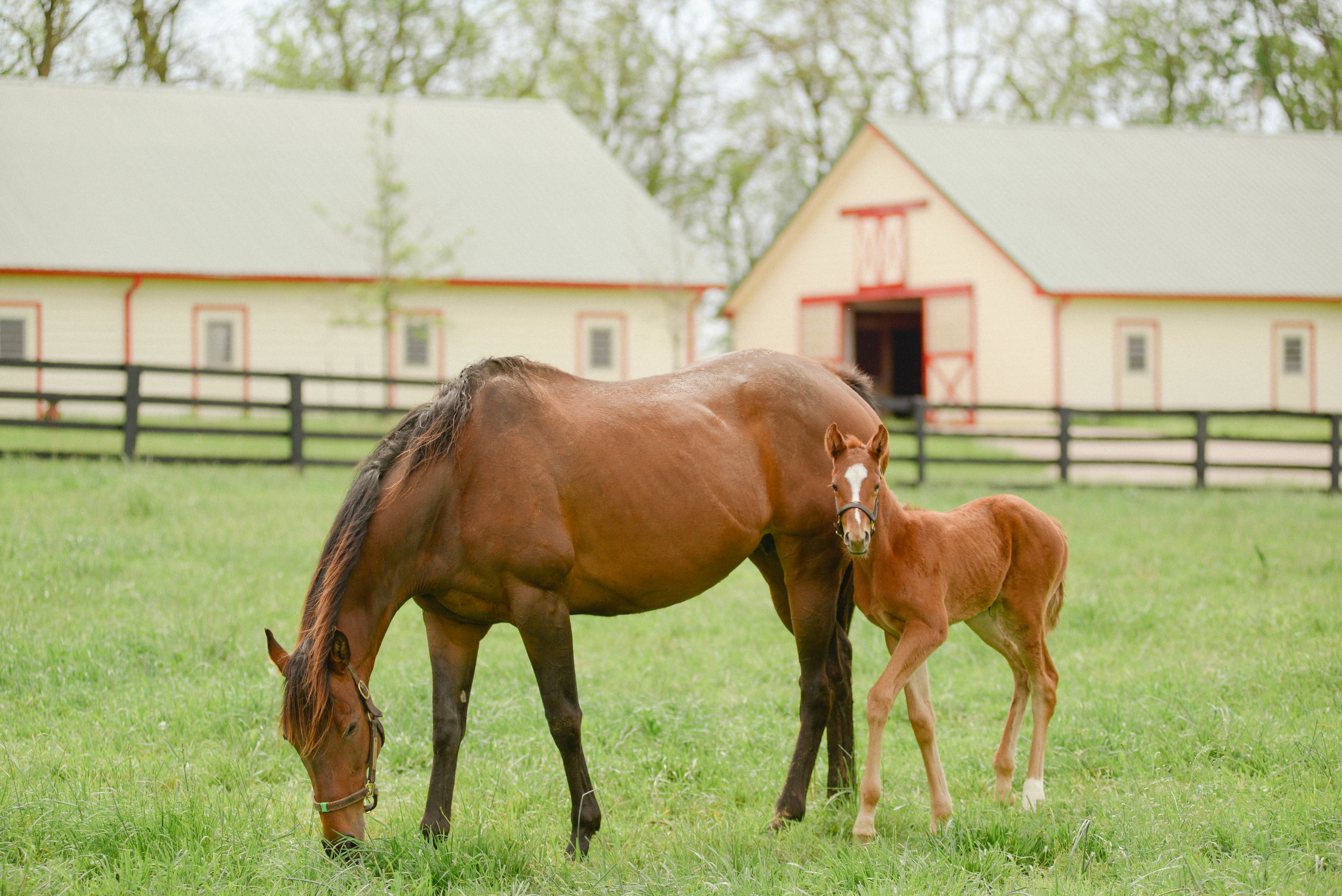 Kentucky Derby photography