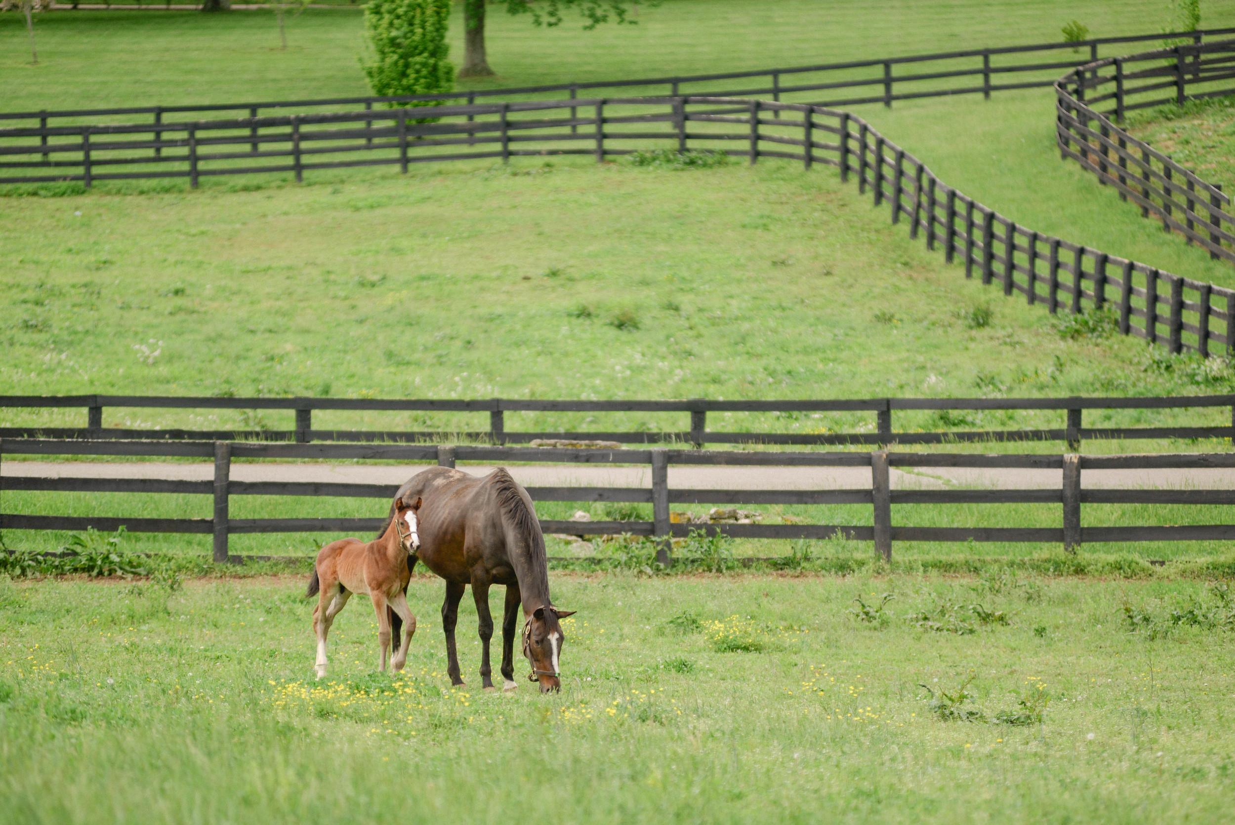 Kentucky equine photographers