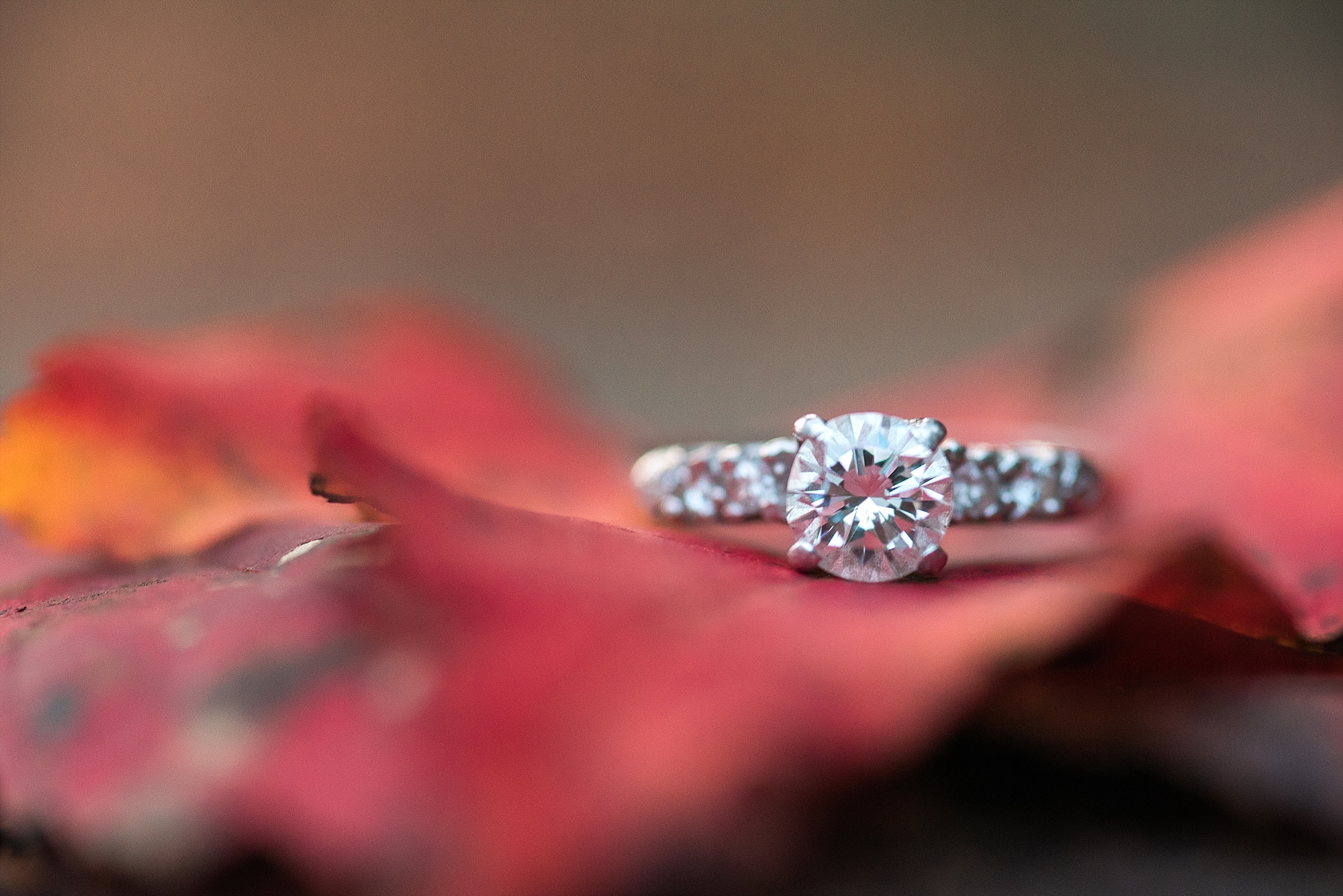 ring-shot-fall-leaves