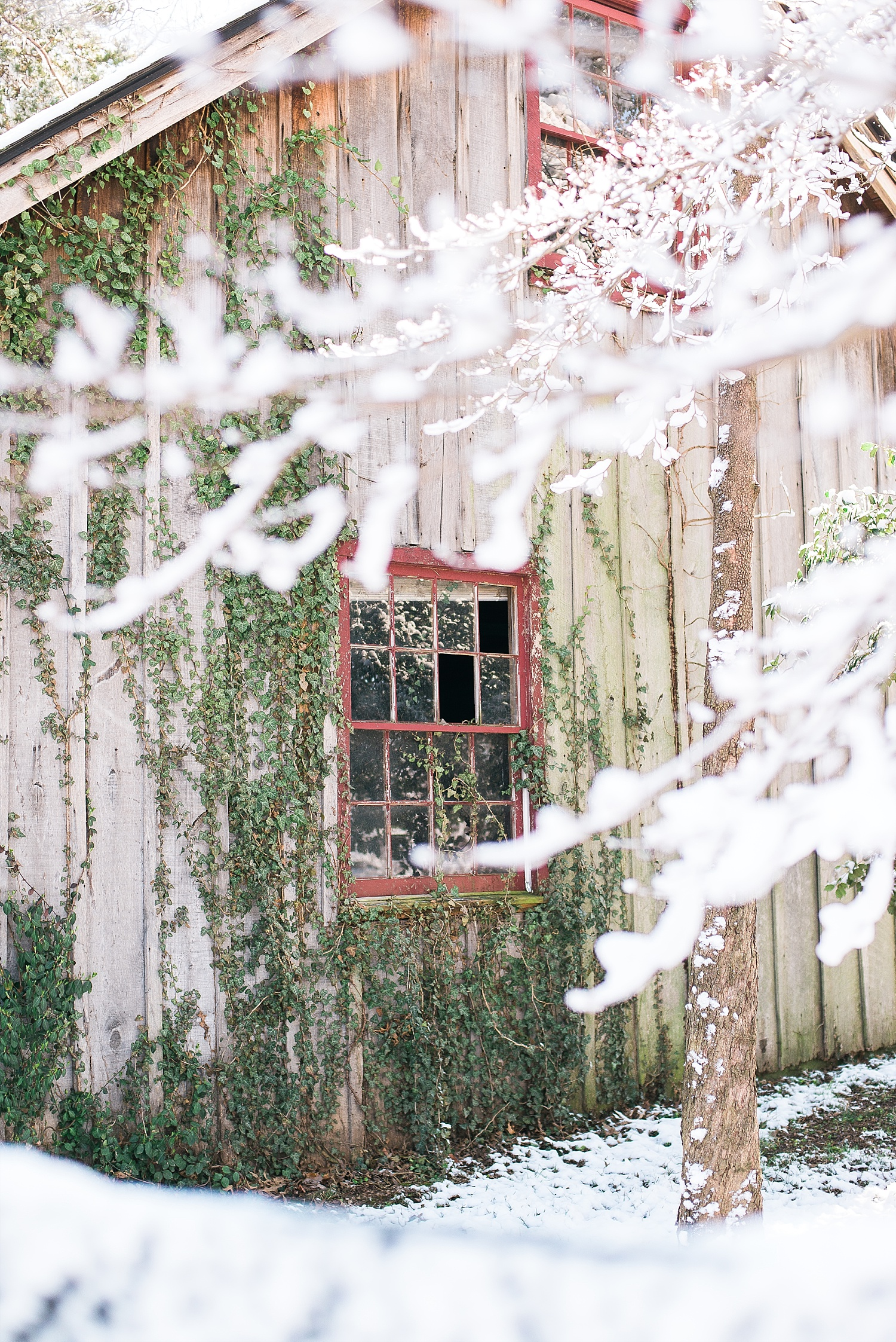 kentucky-in-the-winter