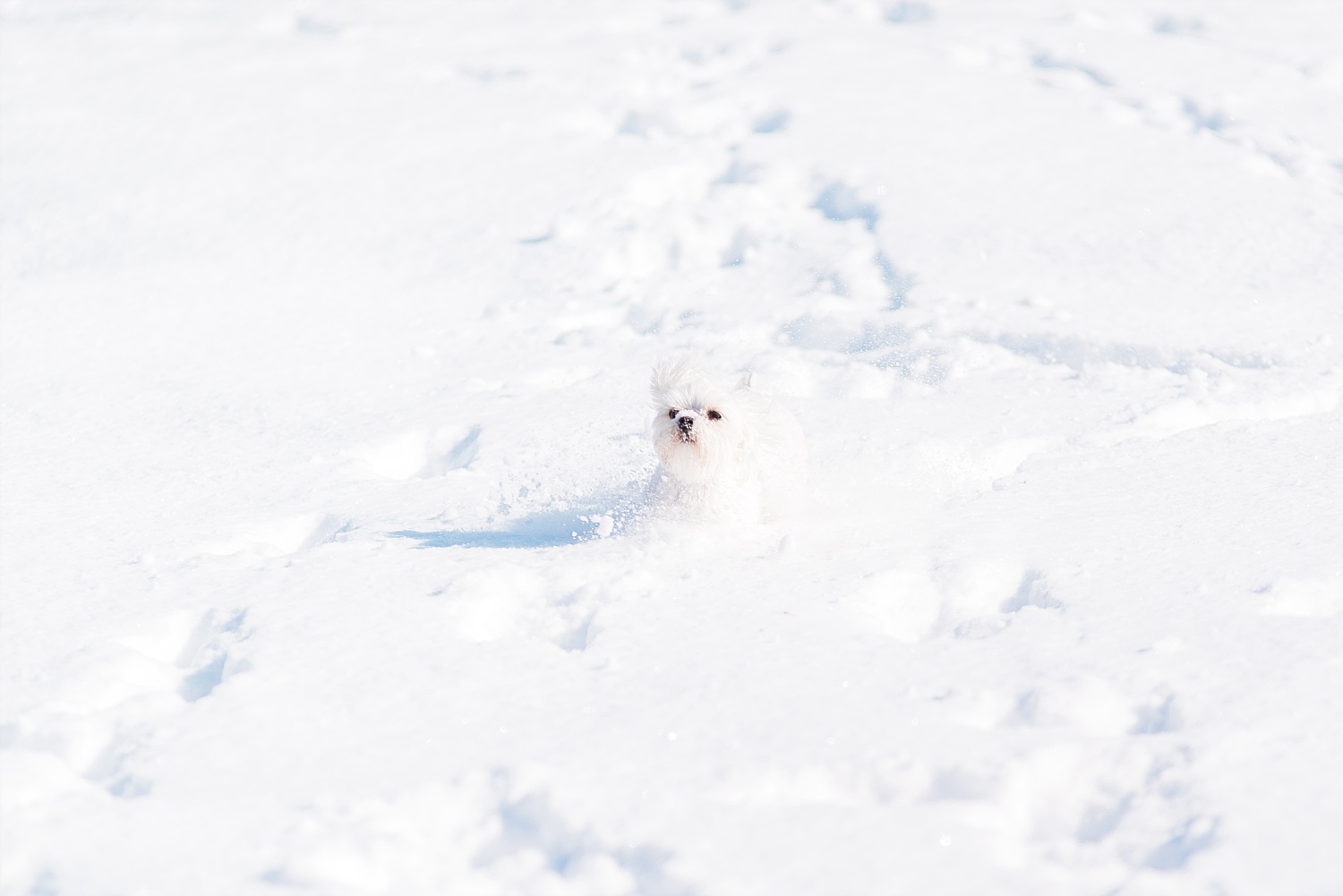 puppy-in-the-snow