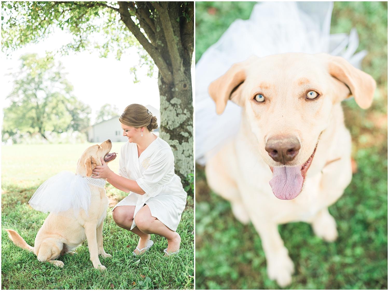 Amy's sweet pup got to wear a veil :)