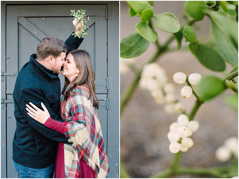 mistletoe-photos