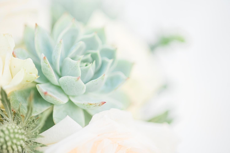 succulents-wedding