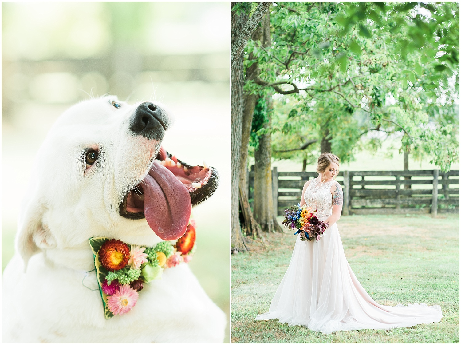 weddings-with-pets