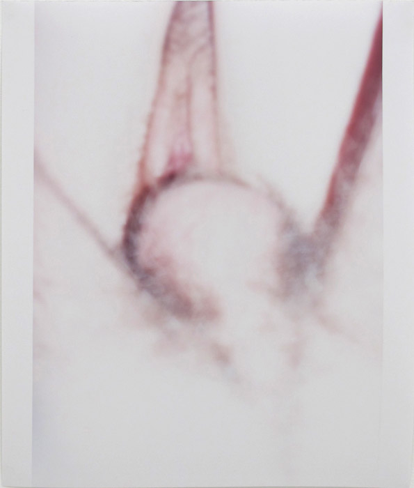 Ryan Foerster,  Penis and Vagina,  2004, C-print, 16 x 10 in